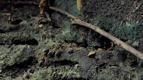 Termites dans la forêt tropicale tropicale clips vidéos