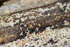 Termites Royalty Free Stock Photos