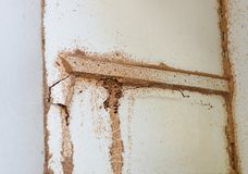Termites destroying wood inside the wall. / Termite problem in house concept royalty free stock photos