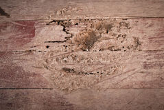 Termites eat wood floor Royalty Free Stock Photo