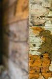 Termites en bois de décomposition Images libres de droits