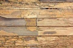 Termites en bois de mur de texture Image stock