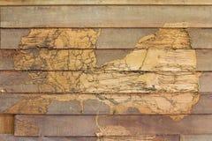 Termites en bois de mur de texture Images libres de droits