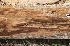 Termites that gnawing wood panel. Light and shade Stock Photos