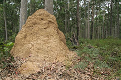 Termites Hill. In australians forest Royalty Free Stock Photo
