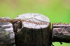 Termites immigrants in forest. Rainy season royalty free stock photo