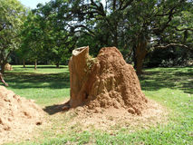 Termites nest. A termites nest, Queen Elizabeth National Park, Uganda, Africa Royalty Free Stock Images