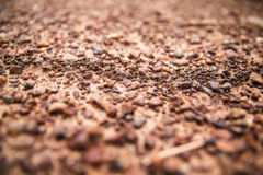 Termites row and carry material selective focus Royalty Free Stock Image
