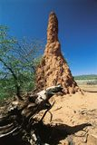 Termites skyscraper. Big termitary in African desert royalty free stock photos