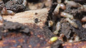 Termites in Termite mound for background.