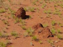 Termites Stock Images