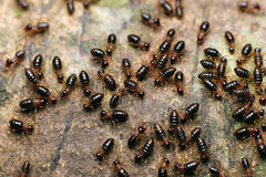 Termites on the tree Stock Image