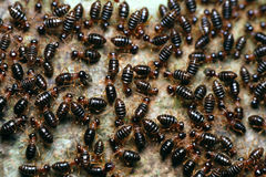 Termites on the tree Royalty Free Stock Photo