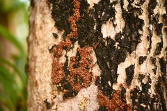 Termites on trees Stock Images