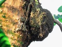 Termitrede på ett dött träd Fotografering för Bildbyråer