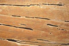 Termitspår på träväggen Arkivfoto