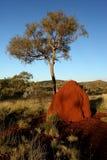 Termitu drzewo na rewolucjonistki ziemi i kopiec Zdjęcia Royalty Free