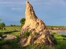 Termitu kopiec w Afryka zdjęcie royalty free