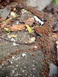 termity Obraz Stock