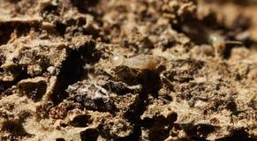 Termity iść nad zniszczonym drewnem Fotografia Royalty Free