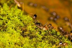 Termity na zielonym mech Obraz Royalty Free