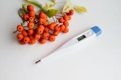 Termometr mierzyć temperatury i jesieni czerwieni rowan Zdjęcie Royalty Free