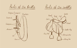 Parts of a saddle and bridle, . Stock Photos