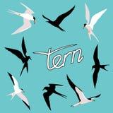 Tern  bird vector illustration style Flat  set silhouette Royalty Free Stock Photography