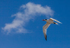Tern Stock Images