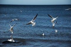 Tern. White sea birds living on the Baltic Sea Stock Photo
