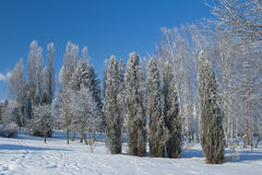 Ternopi frost park. Ternopil park snow winter frost background beauty stock photo