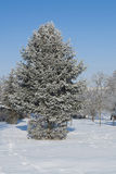 Ternopi frost park. Ternopil park snow winter frost background beauty Royalty Free Stock Photography