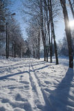 Ternopi frost park. Ternopil park snow winter frost background beauty Royalty Free Stock Photos