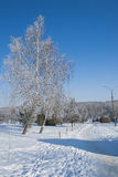 Ternopi frost park. Ternopil park snow winter frost background beauty Royalty Free Stock Photo
