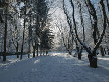 Ternopi frost park Royalty Free Stock Images