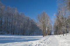Ternopi frost park. Ternopil park snow winter frost background beauty Stock Photography
