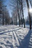 Ternopi mrozu park zdjęcia royalty free