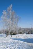 Ternopi mrozu park Zdjęcie Royalty Free