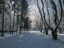 Ternopi mrozu park Obrazy Royalty Free