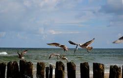 terns Стоковое Фото