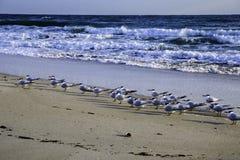 Terns on Beach in Florida Stock Photos