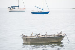 Terns on small boat Stock Photo