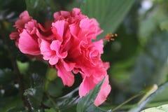 Ternura da flor dos pilões fotos de stock