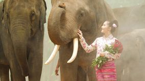 Ternura da mulher asiática atrativa nova no traje tradicional com elefante filme