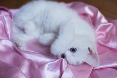 Ternura do retrato do gato Foto de Stock