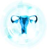 Útero azul abstracto de la hembra del color Imagen de archivo