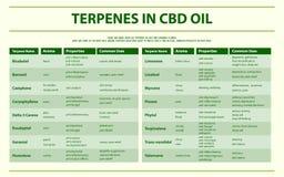 Terpènes dans infographic horizontal d'huile de CBD illustration libre de droits