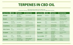 Terpenes in CBD oil horizontal infographic. Healthcare and medical illustration about cannabis royalty free illustration