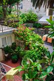 Terraço ajardinado bonito de uma casa com flores e plantas pátio Jardim de florescência Foto de Stock Royalty Free