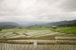 Terraço arquivado arroz na estação da colheita Imagens de Stock Royalty Free